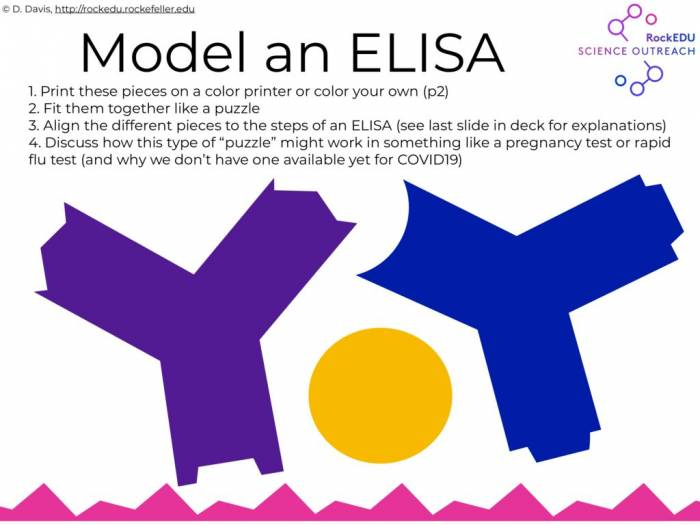ELISA puzzle ANSWERS and EXPLAINERS