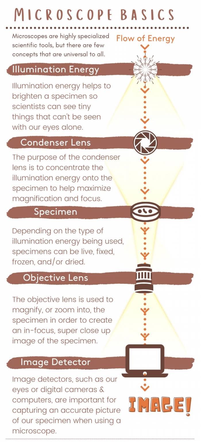 Microscope Basics: The Path of Illumination Energy