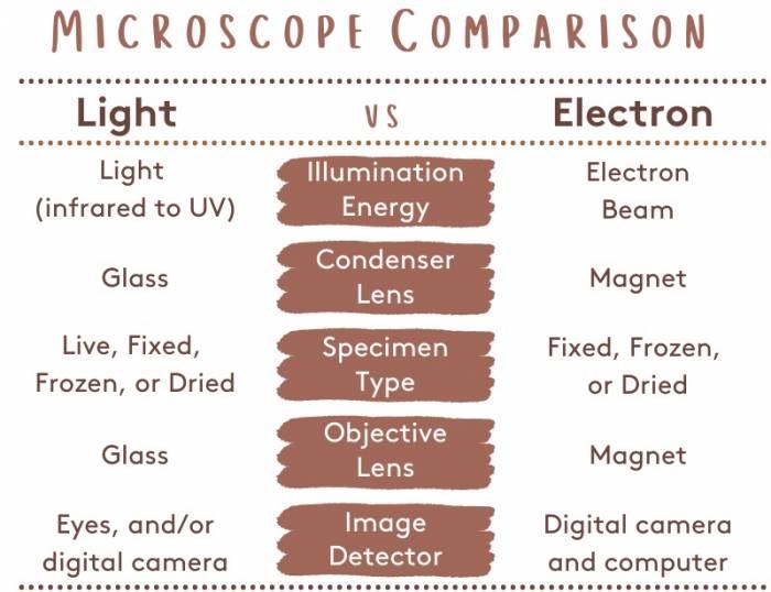 Light vs Electron Microscope