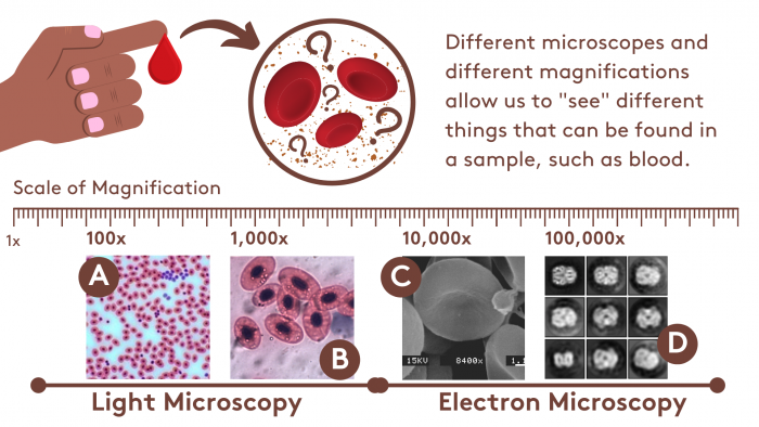 What can we see in blood? A tour of different microscopes