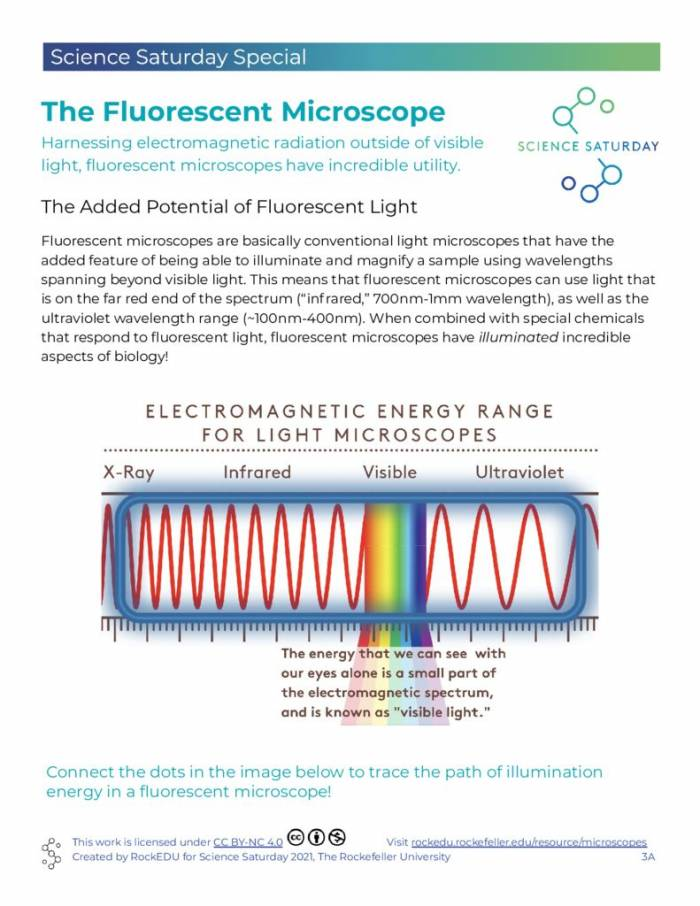 Fluorescent Microscope Info and Coloring Page