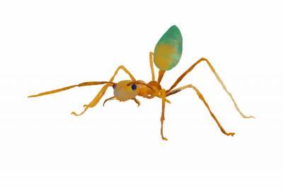 https://rockedu.rockefeller.edu/wp-content/uploads/2021/04/Oecophylla-smaragdina-weaver-ant-400x267.jpg