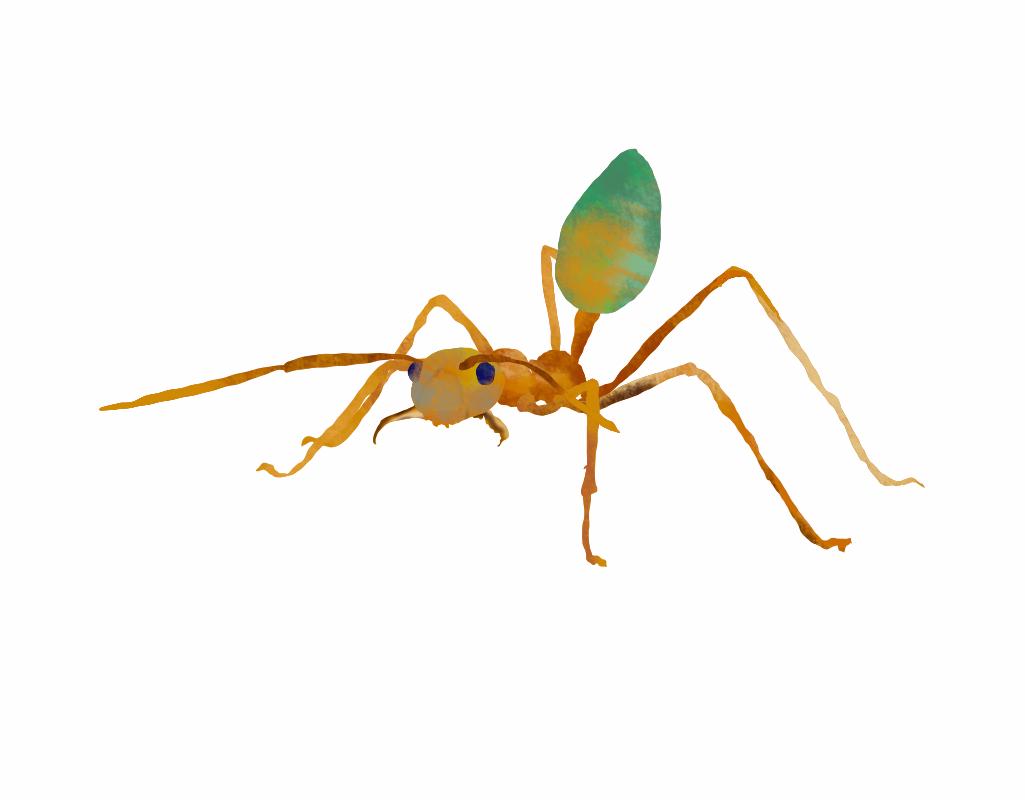 https://rockedu.rockefeller.edu/wp-content/uploads/2021/04/Oecophylla-smaragdina-weaver-ant.jpg